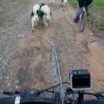 Non-Stop dogwear Bike antenna | 1000 | Bikejöring, Scooterjöring – Vorschaubild 11