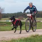 Non-Stop dogwear KlickFix antenna | 2040 | Bikejöring, Scooterjöring – Vorschaubild 3