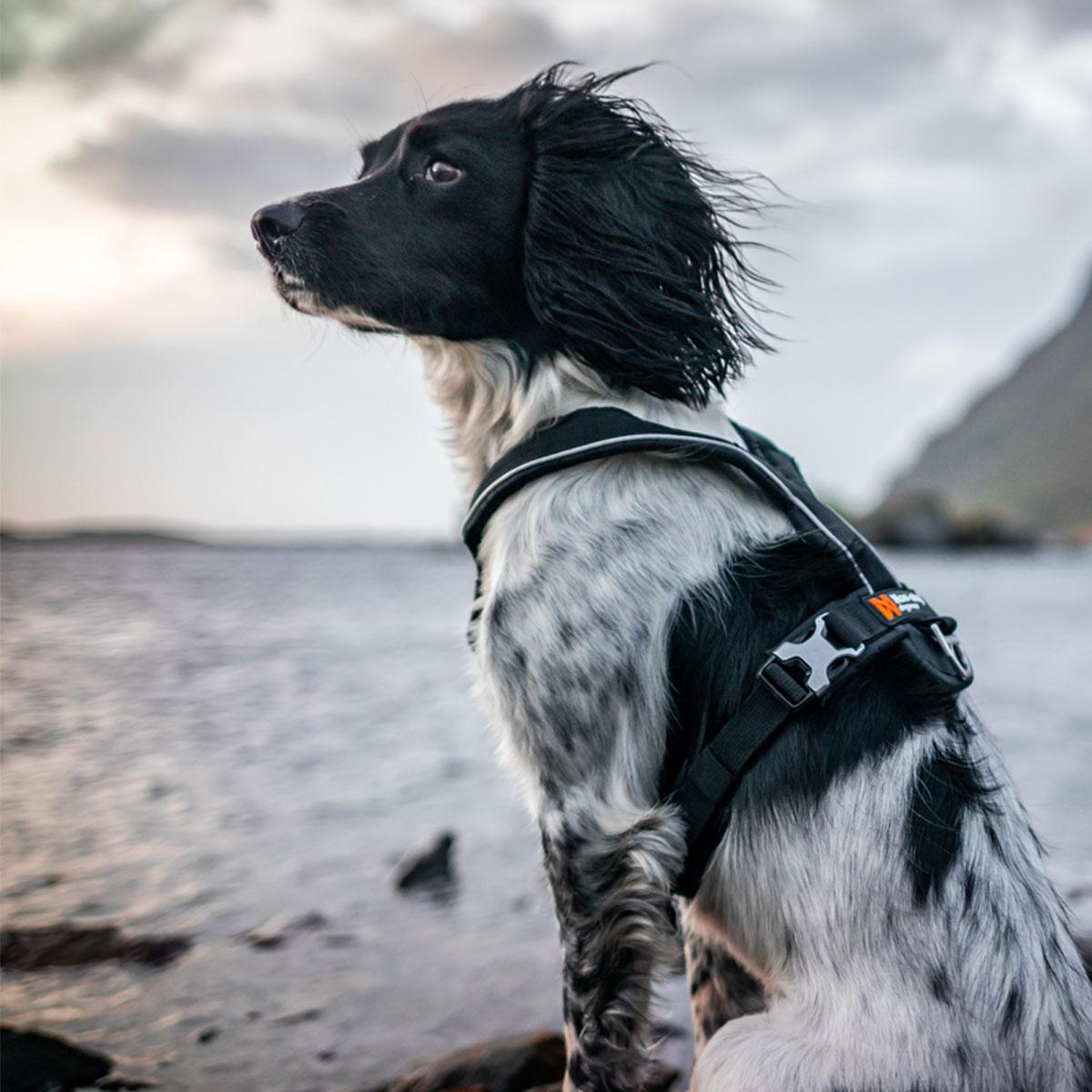 2 Non-stop dogwear Half Harness